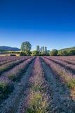 淡紫色领域在普罗旺斯,法国 库存图片