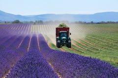 淡紫色领域在法国在收割期 库存照片