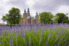 淡紫色领域在Tivoli庭院里 图库摄影