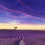 淡紫色领域夏天日落风景 库存图片