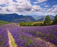 淡紫色领域夏天风景 免版税库存图片