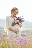 淡紫色领域的孕妇 免版税图库摄影