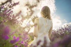 淡紫色领域走 图库摄影