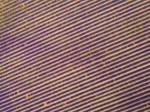 淡紫色领域鸟瞰图在充分的开花的季节的 库存图片