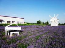 淡紫色领域,伊犁,中国 免版税库存图片
