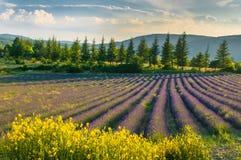 淡紫色领域,普罗旺斯,法国 图库摄影