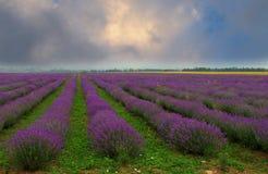 淡紫色领域 库存图片
