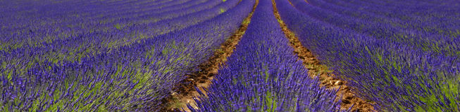 淡紫色领域 图库摄影