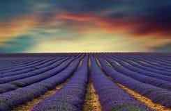 淡紫色领域11 库存照片