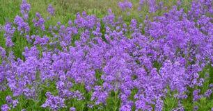 淡紫色:幽鹤国家公园 免版税库存图片