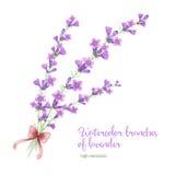 淡紫色水彩分支  免版税库存图片