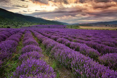 淡紫色黎明 免版税库存照片