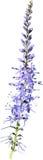 淡紫色紫色花 库存图片