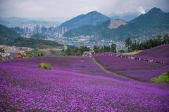 淡紫色主题乐园 库存照片