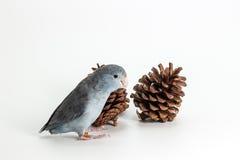 淡紫色Forpus长尾小鹦鹉,鸟 库存照片