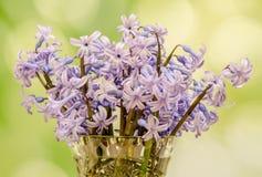 淡紫色Hyacinthus orientalis在一个透明花瓶,关闭开花(共同的风信花、庭院风信花或者荷兰风信花) 免版税库存图片