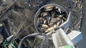 淡水鱼 库存图片