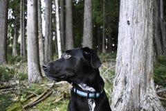 深刻的想法在森林里 免版税库存照片