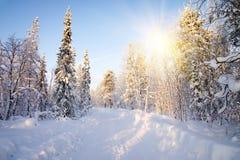 深刻的森林冬天 免版税库存照片