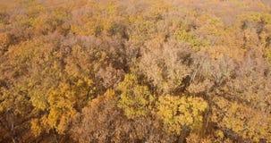 深刻的秋天在森林里 股票录像