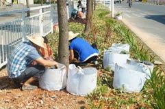 深圳,中国:种植树和草在绿化区 免版税库存照片