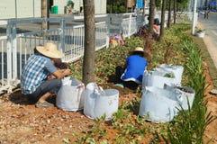 深圳,中国:种植树和草在绿化区 库存照片