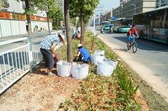 深圳,中国:种植树和草在绿化区 免版税库存图片