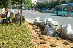 深圳,中国:种植树和草在绿化区 库存图片