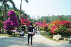 深圳,中国:莲花小山公园风景 图库摄影
