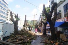 深圳,中国:击倒的树 免版税库存图片