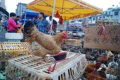 深圳,瓷:鸡摊位 免版税库存照片