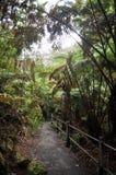 深夏威夷密林 免版税库存图片