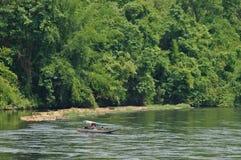 深密林和鲜绿色大河有一点长尾巴小船的 库存图片