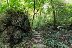 深密林在猫Ba海岛 库存照片