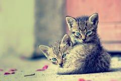 深度域小猫浅二个年轻人 库存图片