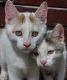 深度域小猫浅二个年轻人 免版税库存图片