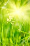 深度域浅的草绿色 库存图片