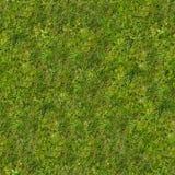 深度域草绿色草坪狭窄 免版税库存照片