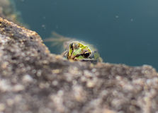 深度注视眼睛域重点青蛙红色反映浅结构树水 库存图片