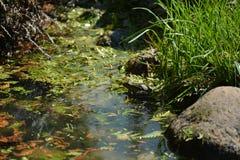 深度注视眼睛域重点青蛙红色反映浅结构树水 免版税库存照片