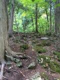 深暗藏的森林 库存图片