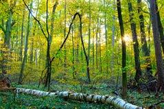 深森林在秋天 免版税库存照片