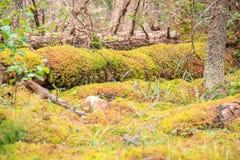 深森林地板在秋天 库存图片