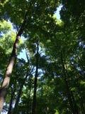 深森林天空 免版税库存照片