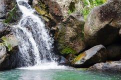 深森林小热带瀑布 免版税库存照片