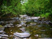 深森林山河 库存图片