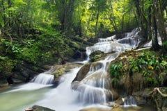 深森林瀑布 免版税库存照片