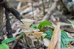 深森林蘑菇 图库摄影