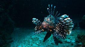 深海的国王 免版税图库摄影