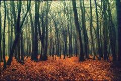 深深入老保守森林 免版税图库摄影